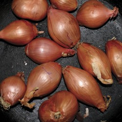 """TY SEGALL """"Fried Shallots"""" LP."""