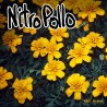 "NITRO POLLO ""What's The Point"" LP."